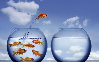 Océan Bleu : Se soucier du client plus que du concurrent